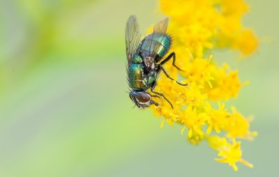 fliegengitter pollenschutzgewebe