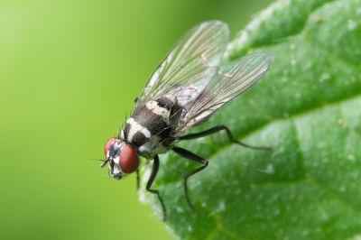 kellerschachtabdeckung als insektenschutz